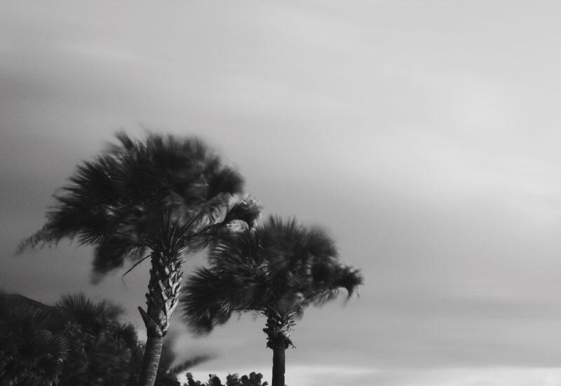 Breezy palms 2